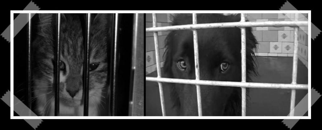 Chat et chien derrière les barreaux d'une fourrière